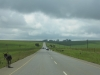 r68-cattle-on-road-2