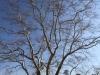 Michaelhouse -  Plein trees (5)