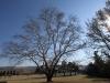 Michaelhouse -  Plein trees (6)