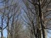 Michaelhouse -  entrance gate & memorial trees (7)