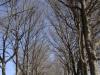 Michaelhouse -  entrance gate & memorial trees (8)