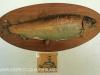 Beaconvlei -  Frank Stacey 1965 - record trout 10 lb 4 oz (2)