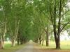 Baynesfield  - Entrance - Avenue of trees f5 (1)