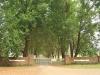 Baynesfield  - Entrance - Avenue of trees f5 (2)