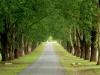 Baynesfield  - Entrance - Avenue of trees f5 (9)