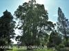 Baynesfield Estate garden (1)