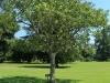 Baynesfield Estate garden (2.) (5)
