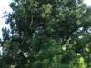 Baynesfield Estate garden (3)