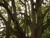 baynesfield-gardens-3