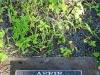 Baynesfield St Johns Church grave Pete & Affie Mordaunt