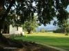 Bergville Dalmore farm bilhambra tree (1)