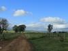 Bergville Dalmore farm north entrance driveway (3)