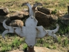 mt-itala-battlefield-upper-spur-graves-2854-pte-a-roberts-1st-york-lancs-s-28-30-451-e-31-03-179-8