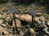 mt-itala-battlefield-upper-spur-graves-pte-3299-golding-5283-pte-a-larkman-s-28-30-451-e-31-03-179-10