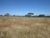 Rietfontein Farm - Boer Cemetery - S 28.28.49 E 29.49 (9)