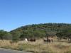 Rietfontein Farm - Pepworth hill from North