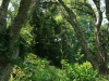 Byrne  - Forest Cliff Enon Estate (10)