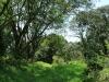 Byrne  - Forest Cliff Enon Estate (4)