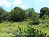 Byrne  - Forest Cliff Enon Estate (7)