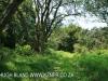 Byrne  - Forest Cliff Enon Estate (8)