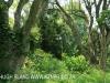 Byrne  - Forest Cliff Enon Estate (9)