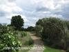 Caversham - Midlands Forest Lodge gardens (4)