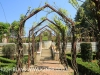 Riversfield Farm  gardens pergola (2)
