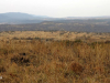 Colenso - Inniskilling Hill views towards Monte Cristo hill (1)