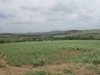 Umhlanga River views towards Verulam (2)
