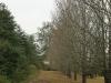 Cramond House driveway) (2)