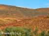 Aloes alongside the Paton Country Rail (10)...