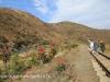 Aloes alongside the Paton Country Rail (14)...