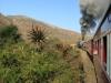 Aloes alongside the Paton Country Rail (14)
