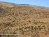 Aloes alongside the Paton Country Rail (19)