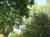 Newstead gardens (5)