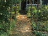 Yellowwoods back garden and pathways (4.) (4)