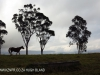 Beverley horses (2)
