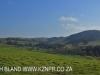 Dargle Farm - fields (1)
