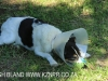 Owthorne Farm - Dargle - farm dog