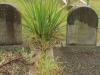 Dargle - St Andrews Church - Grave - Charles & Morelle Pratt -