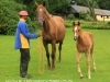 Selsey stabling and horses (10)