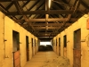 Selsey stabling and horses (22)