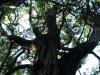 Cavern Berg Nature trail cabbage tree (1)