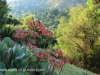 Cavern Berg flora