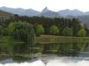 Lake Navarone tree reflections (16)
