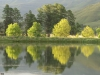 Lake Navarone tree reflections (23)