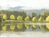 Lake Navarone tree reflections (9)