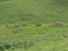 Didima - Eland Herd (2)