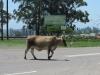 inchanga-r103-100-hills-traffic-lights-1