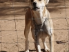 adelaide-farm-dogs-dundee-s28-01-955-e30-13-382-elev-1264m-16